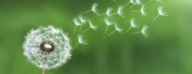 cropped-dandelion-bess1